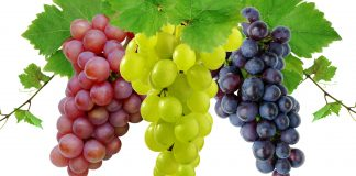 What gives wine its color?