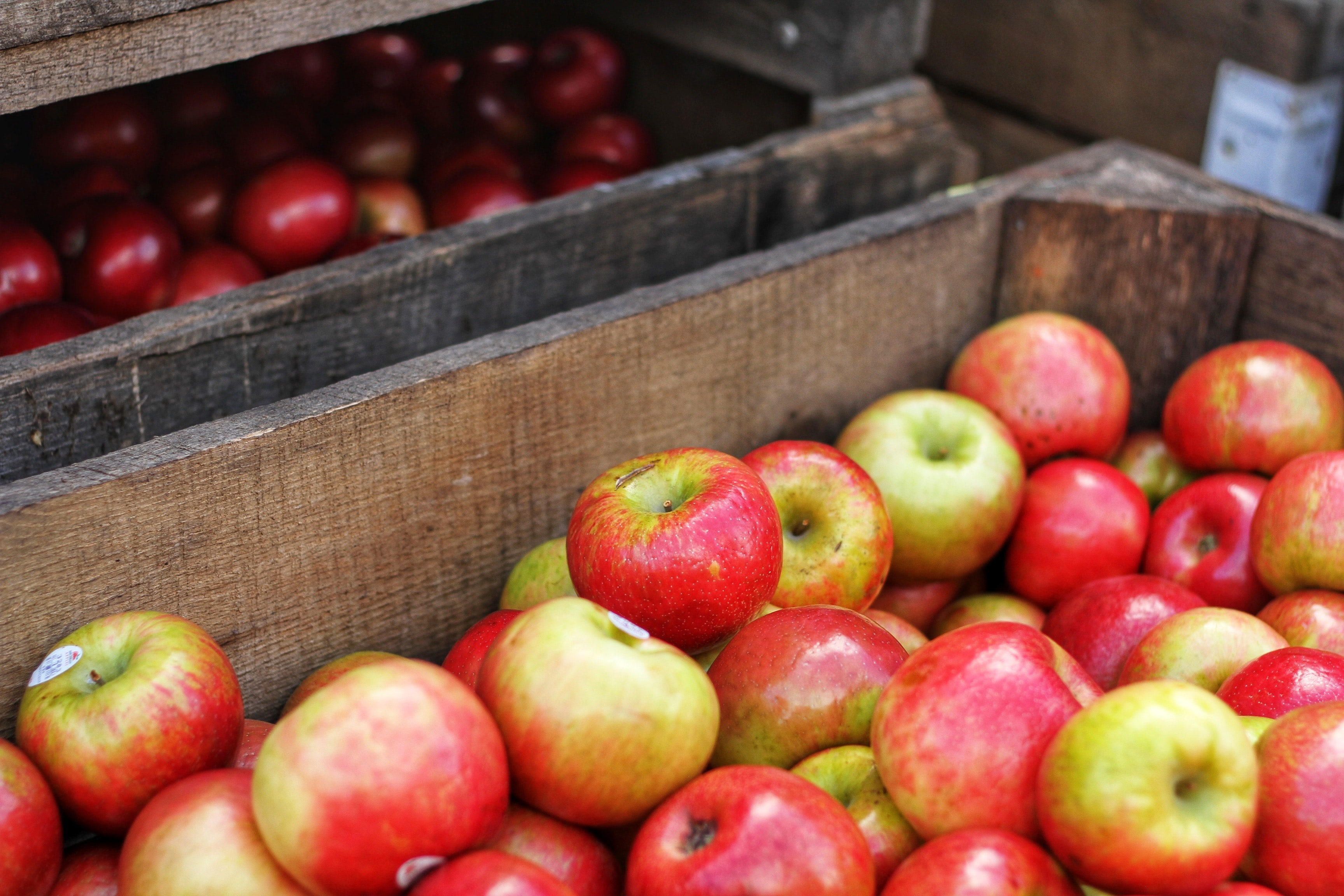 Apple Sangria Recipe   Coravin Blog